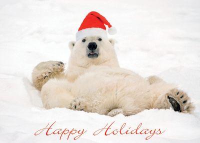 Polar Bear in Santa Hat Christmas Card
